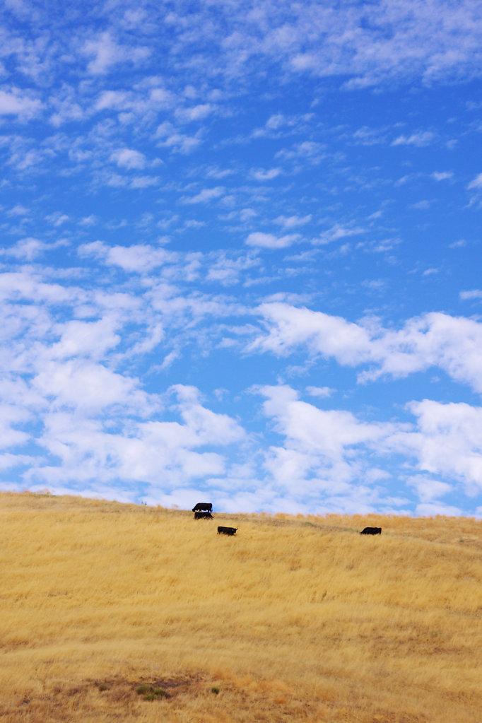 Central California Valley #2