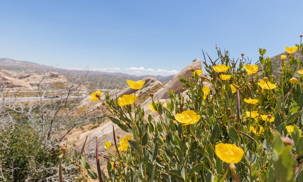 Mormon Rocks | Phelan, CA